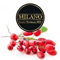 Табак MILANO (Милано) 100 грамм - Berberis M63 (Экзотические Барбарис)